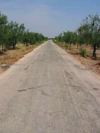 "SP 64 ""desertificata"""