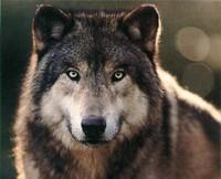 """""""Se non stai buono chiamo il lupo""""."""