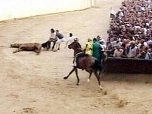 Palio Siena 2004 agosto il cavallo Amoroso a terra