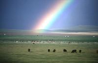 Mongolia, la steppa privatizzata