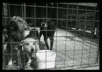 Mondo cane, mondo bambino