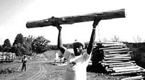 Foto Fao taglio alberi