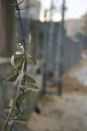 Gerusalemme 7. Foto inviata da Gabriele Viviani, fotoreporter