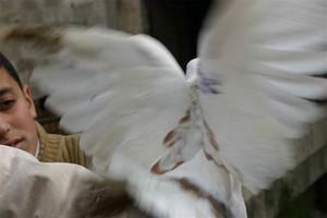 Gerusalemme 11. Foto inviata da Gabriele Viviani, fotoreporter