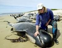 Come muore una balena