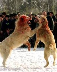 lotta tra cani Reuters