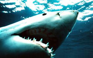 Uno squalo (Reuters)