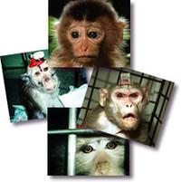 A che serve la vivisezione ?