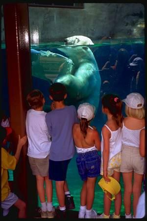 Orsi allo zoo