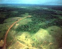 Amazzonia: Ogni anno vanno perduti 20 mila chilometri quadrati di foresta.