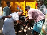 la famiglia servitana indiana consegna le capre