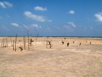 il cimitero sulla spiaggia. un albero è stato piantato per ogni morto