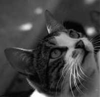 I gatti di Hill Grove