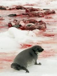 Il giorno della prima foca