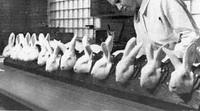 Cosmetici, dal 2013 stop ai test sugli animali