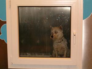 cane in lavatrice