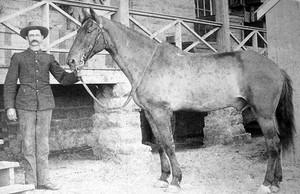 il cavallo comanche