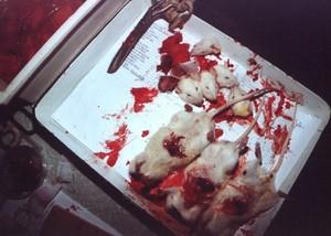 vivisezione di topi
