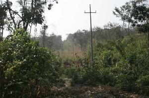 I pali della linea elettrica attraversano la foresta in direzione dell'ospedale di Kimbau