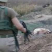Canicidio: la fine di un cane terrorista e antiamericano