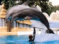 Salvate i delfini dai delfinari