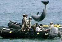 Flipper, il delfino che spara, disperso da Katrina