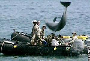 addestramento delfini