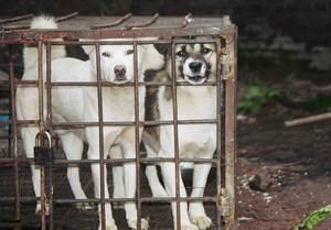 Cani  da mangiare