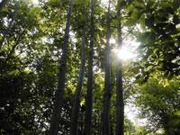 Gli alberi sono preziosi: non tagliamoli!