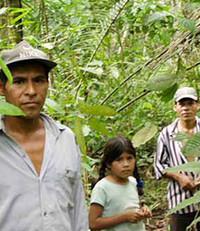 Un gruppo di indios raccoglie le foglie di coca