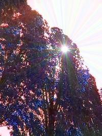 Il sole dietro gli alberi