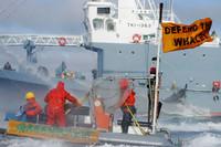 La guerra delle balene
