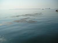 Ecco come uccidono il mare di Taranto
