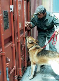 Cani poliziotto, stressati e affamati