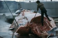 L'Islanda riapre la caccia alle Balene