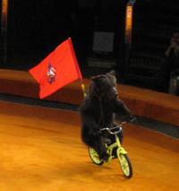 L'arte circense e le rappresentazioni degli animali
