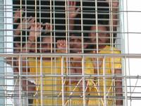 Altro che favoritismi, i migranti in Italia trovano sfruttamento e diritti violati