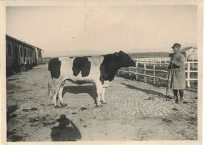 Tenuta di Tor Mancina, 1944. Passacantilli Vincenzo, capo dei vaccari mungitori, che ha distribuito latte ai militari alla macchia, occultando armi e derrate agricole.