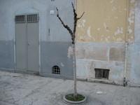 San Ferdinando di Puglia - Verde pubblico