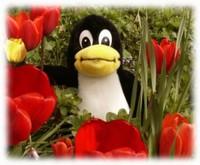 Tux, il pinguino di Linux, in un giardino fiorito