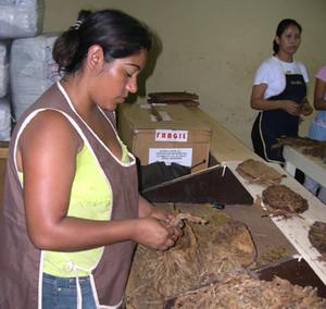 Gesto meccanico ed usurante in una fabbrica di tabacco (Foto G. Trucchi)